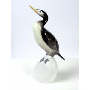 Cormorant Bird, Hollohaza